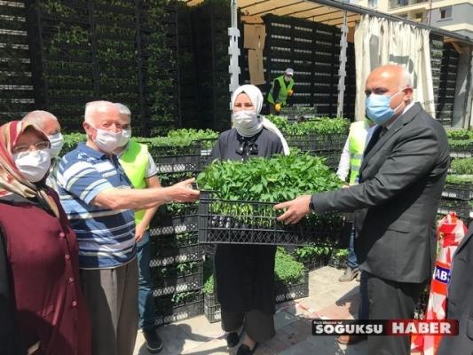 KIZILCAHAMAM'DA 370 BİN ADER FİDE DAĞITILDI