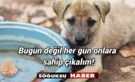 KIZILCAHAMAM'DAN HAYVAN SEVERLERE SESLENİYORUZ